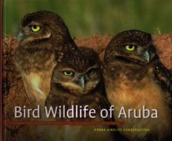 Bird Wildlife of Aruba - 9789460223730 - Gregory Person